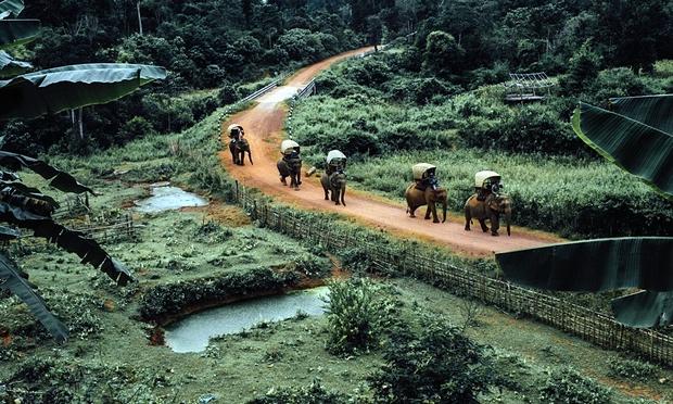 قوافل الفيلة تثير الجدل لدى المحافظين على البيئة