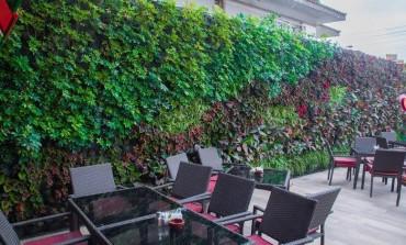 شادوف تلوّن أسطح المباني في مصر بالأخضر