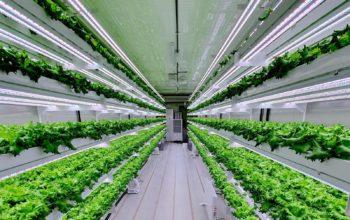 شركة سمارت أكيرس للزراعة العمودية تنطلق في دولة الإمارات خلال 2020