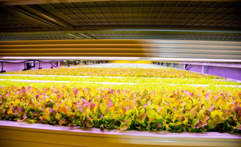 """""""نوكس مانجمنت"""" في الكويت تفتتح أول مزرعة تجارية عمودية داخلية في الشرق الأوسط"""