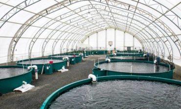 """""""البيئة"""": 3 شركات استزراع مائي تستعد لتصدير من 10 - 15 ألف طن من الأسماك والروبيان إلى روسيا بقيمة مبيعات تصل إلى 293 مليون ريال سنوياً"""