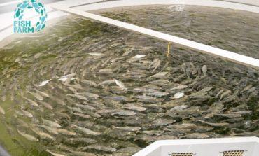 اقتصادية دبي: إمارة دبي تضم 401 رخصة عاملة في مجال تعزيز الثروة السمكية