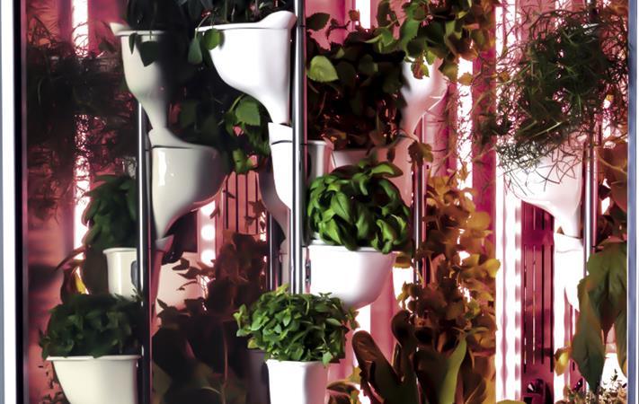 كاوست تستقطب أول شركة في العالم متخصصة في تطوير الزراعة الذكية داخل المنازل