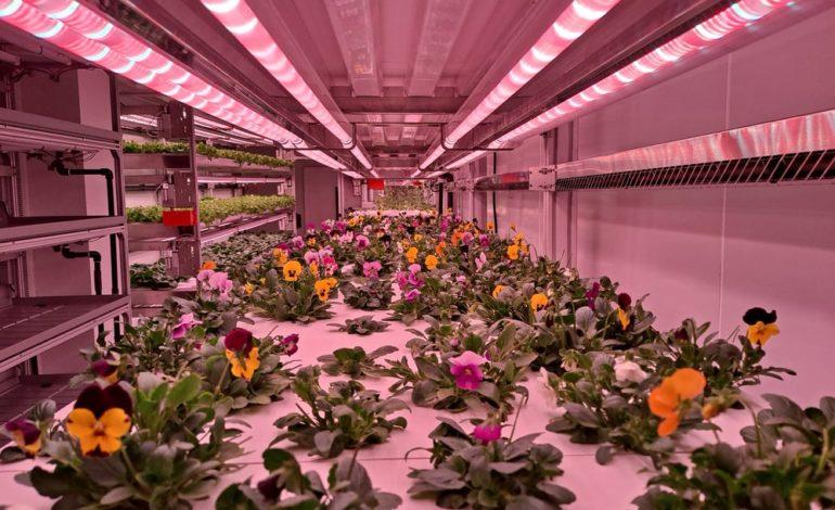 شركة ناشئة تحت دائرة الضوء: اليسكا لايف تكنولوجيز للتقنية الزراعية ومقرها دبي تعمل لضمان ممارسات زراعية مستدامة في الإمارات